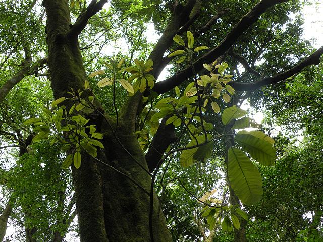 Bosque Tropical de transición