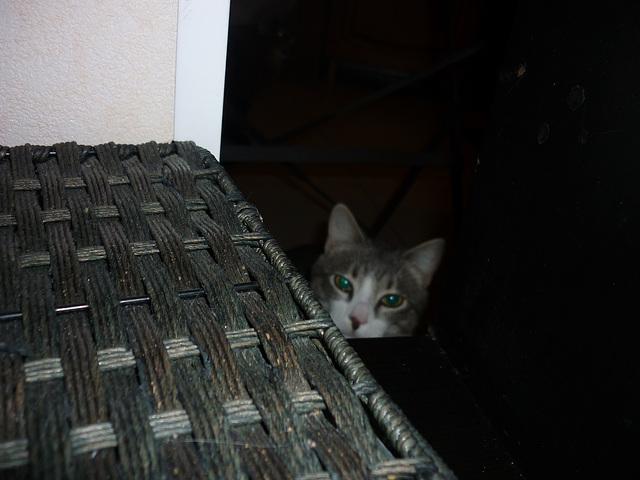 Chalut suis  Choupi ..vous vous souvenez ?Le chat Mérialais reconverti à la vie Marseillaise