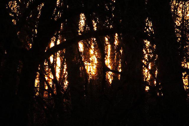 20110207 9762RAw Abendsonne