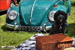 Dogs At Car Shows