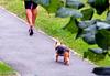 Chien et talons hauts / Dog and high heels - Photographe : Claudette  / Recadrage