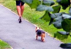Chien et talons hauts / Dog and high heels - Photographe : Claudette