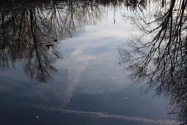 20110207 9715RAw Teich-Spiegelung