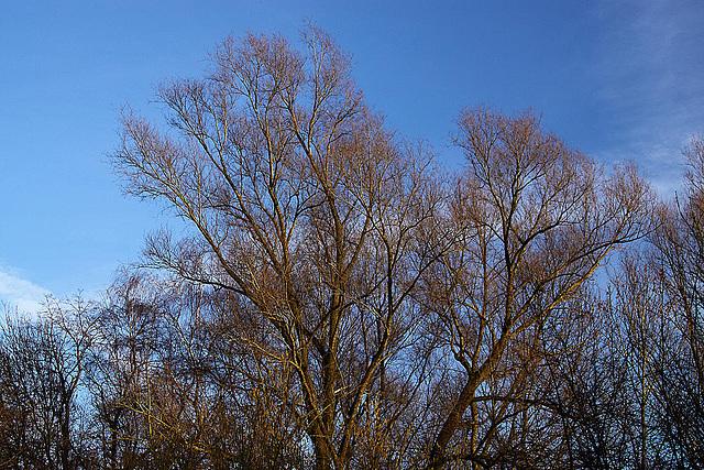 20110207 9708RAw [D~LIP] Bäume