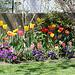 massif aux tulipes