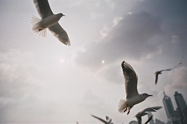 Gulls II.