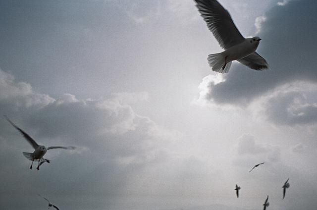 Gulls III.
