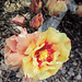 Cactus Flower (0310)