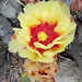 Cactus Flower (0312)