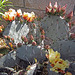Flowering Cactus (0301)
