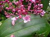 kleine Blüten in PINK