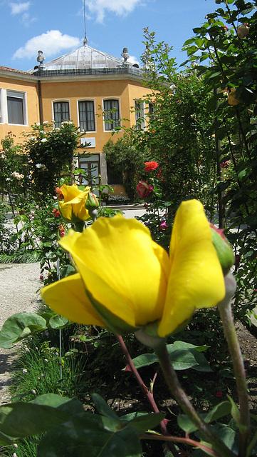 Botanika Ĝardeno - Padova