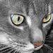 Chat noir et blanc !