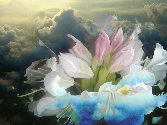 un arc en ciel de fleurs