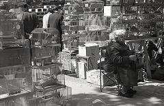 Le marché aux oiseaux - Paris 1965