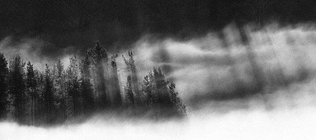 Früh   -    Nebel