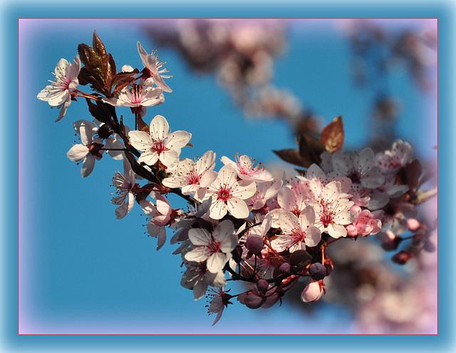 ... und noch ein wenig Frühling ...