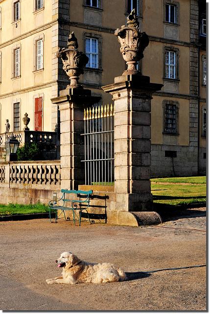 Schlosshund ?