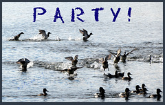 .. Ducks just want to have fun linking to quick Getaway
