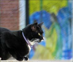 Miz Cat . .