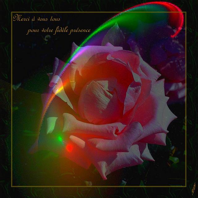 Je vous offre une rose Je la dépose sur les terres de notre amitié