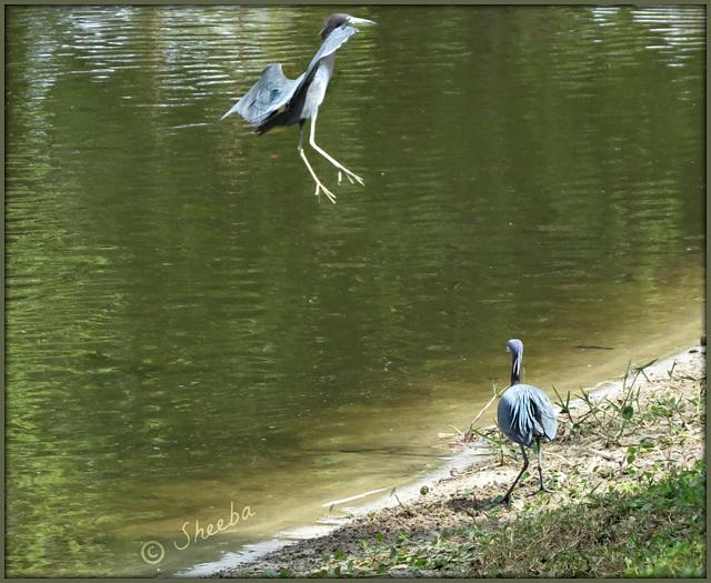 Little Blue landing strip ..