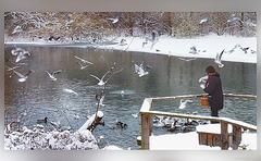 Vogelfütterung (2)