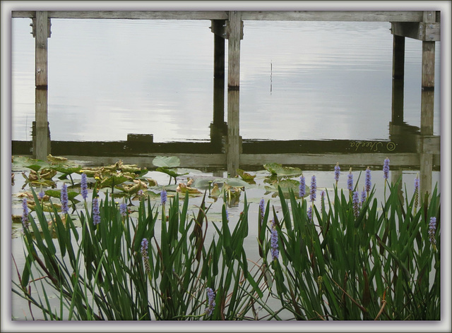 reflections - -