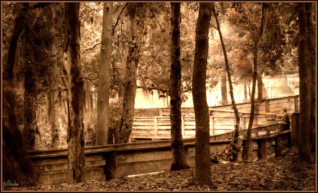 'Old Florida' . .