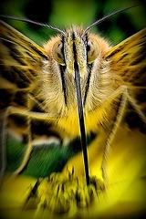 kein Monster-nur'n Schmetterling