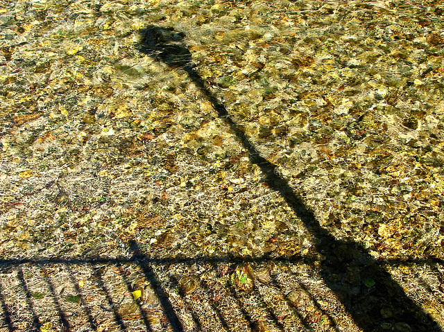 shadows in the stream