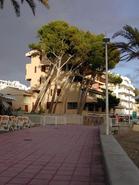Paguera - Strand 3