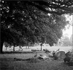 Wood Circle, Brockwell Park.