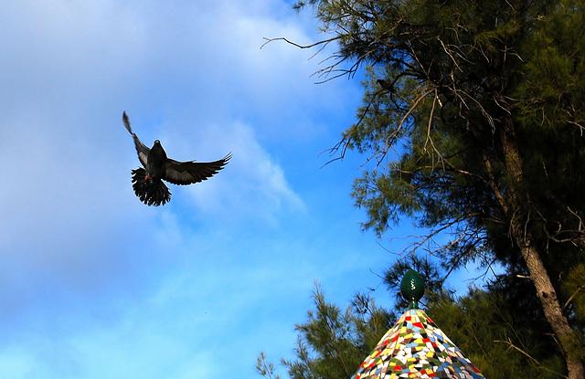 Al refugio del palomar