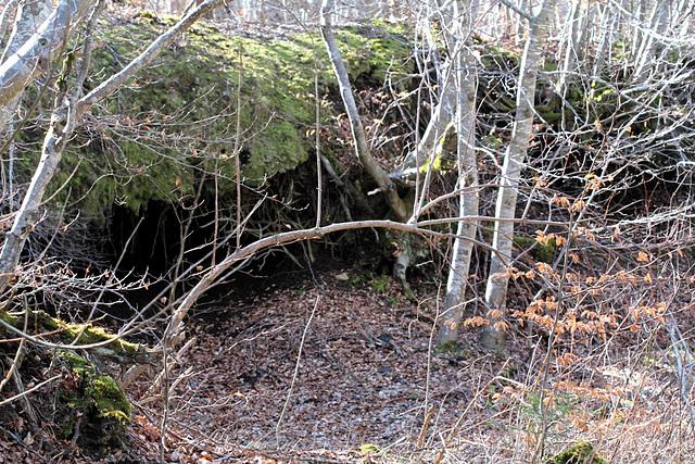 cavité- sous-bois et sous-sol
