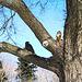 El cuervo y la ardilla
