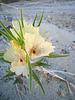 Ghost Flower (6330)