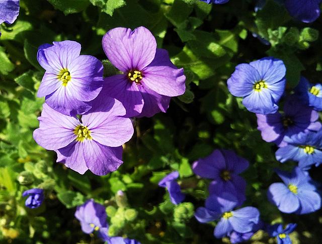 Frühling überall :-)