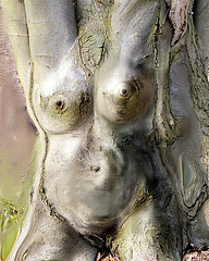 Femme faîte arbre...