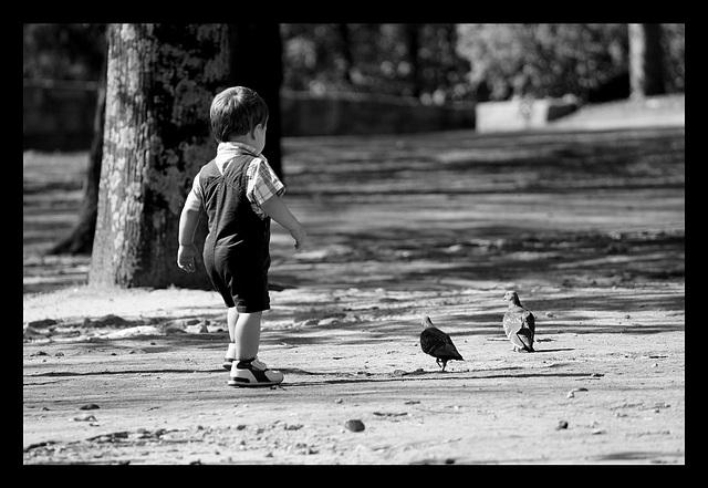 A la poursuite des pigeons!