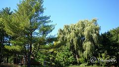 La beauté des arbres !