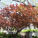 07.Houses.1500BlockQ.NW.WDC.15April2011