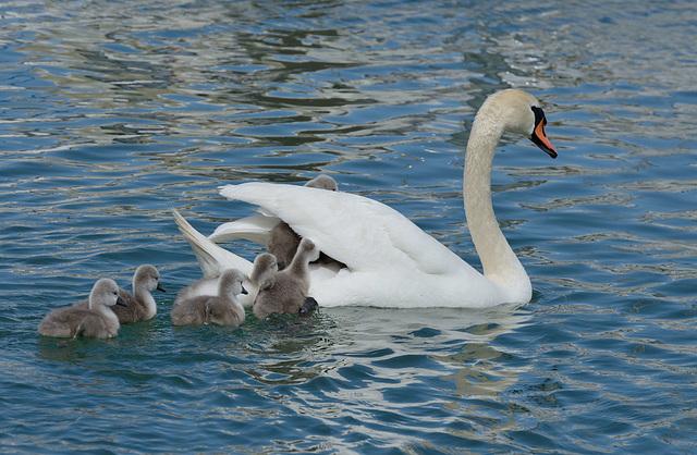 Promenade de la petite famille