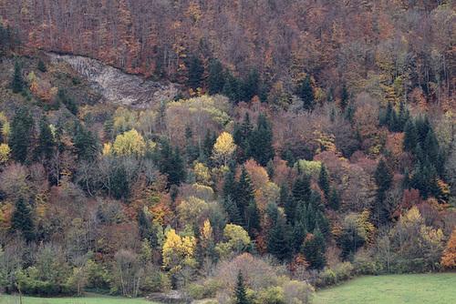Forêt en automne ( Hêtres , Sapins, Peupliers,Erables, Frênes )