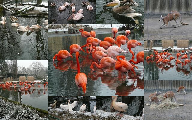 Zoo Dresden im Februar 2011