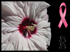 Hardy Hibiscus on black w. BCA ribbon