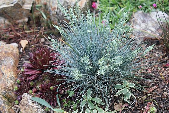 les petites Poaceae et Cyperaceae 10606478.dab0dc23.560