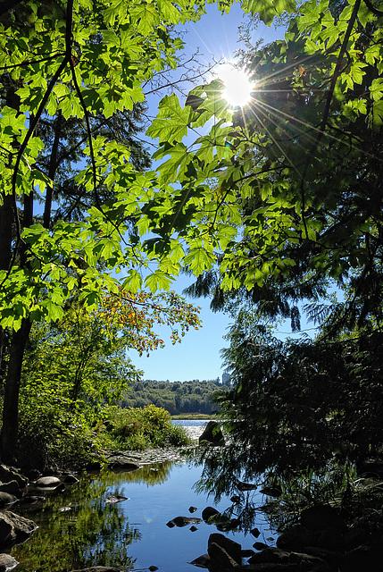 Back Light Serenity - Deer Lake Park