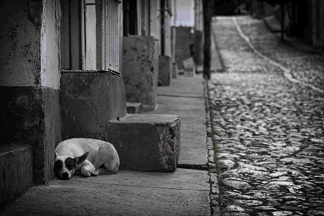 Ciudad de Perros.......Trinidad Cuba