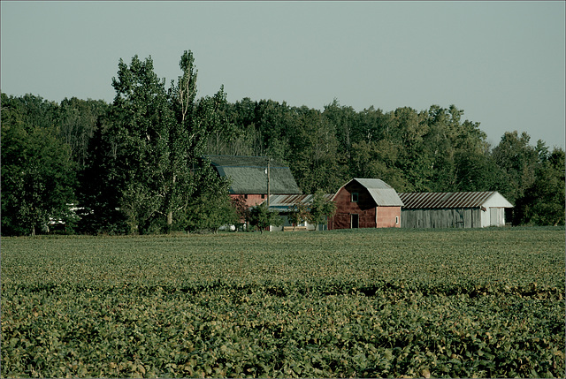 Farm, Shaytown Road